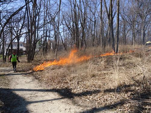 The Ancient Oaks Foundation advocates for good management practices of the villages natural areas, such as this prescribed burn in Spring 2014