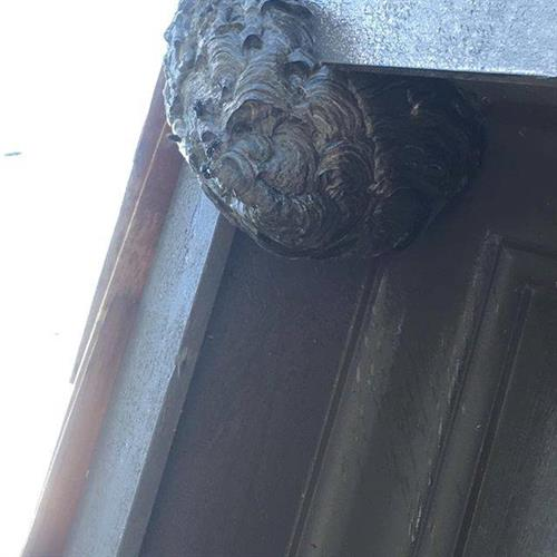 Bald-Faced Hornet nest on a house.