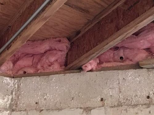 Mouse tunnels in basement insulation.