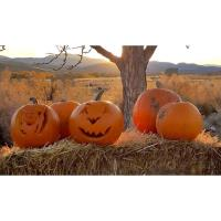 Jack O' Lantern Jamboree at the Walker River State Recreation Area on October 26