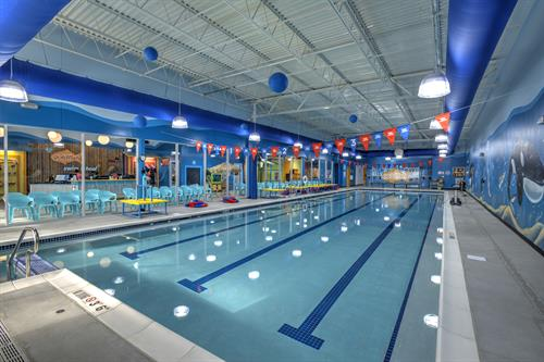 Goldfish Swim Academy Fit-Up, Cary