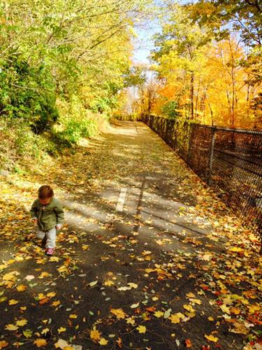Gallery Image Fall_on_WOW_Trail.jpg