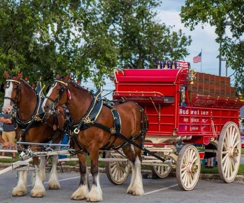 Gallery Image CLYDESDALE_2.jpg