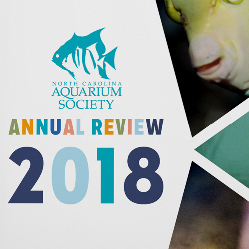The North Carolina Aquarium Society has come to Igoe Creative for years to design their Annual Review.
