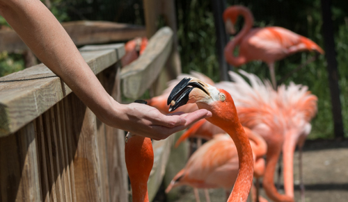 Feeding flamingos in the Landing Zone