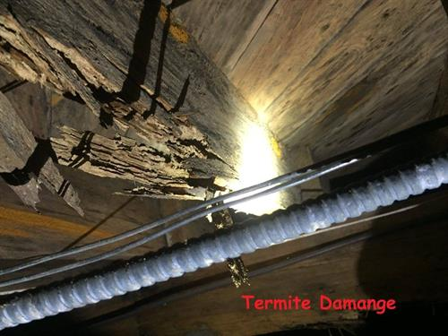 Termite Damage in Crawlspace