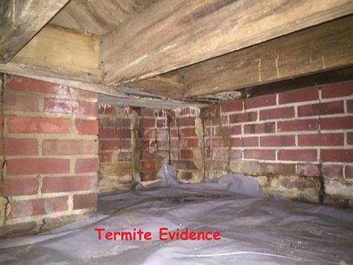 Termite Dirt Tubes Evidence in Crawlspace