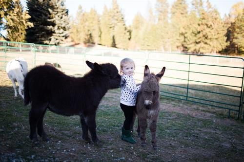 Lennon and her mini donkey friends Oliver and Olivia