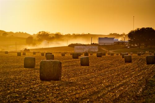 Gallery Image ronald_tigges-sunset_harvest-M.jpg