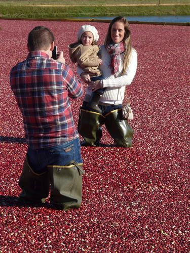 Cranberry Harvest Day