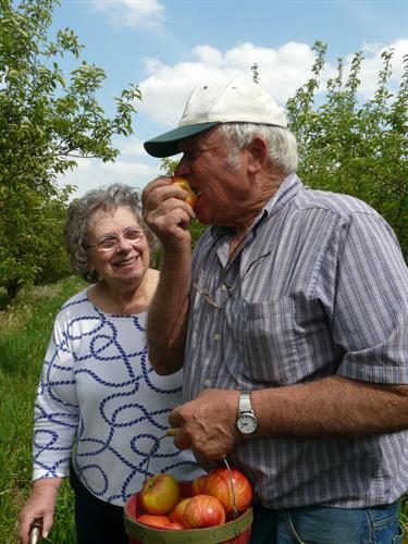 Picking apples at local orchard