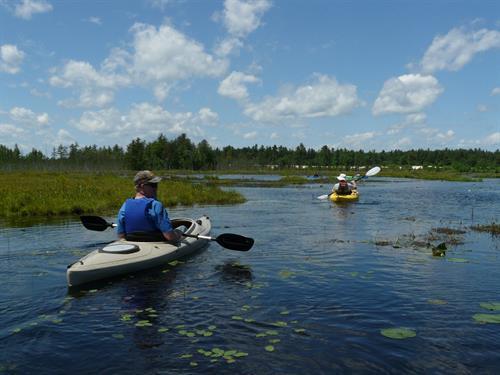 Kayaking on a cranberry marsh reservoir