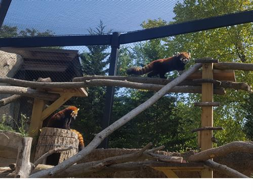 The Zoological Society raises money each year for specific projects at the Zoo in its annual appeal. Recently, the Society raised money for a remodeled red panda exhibit.