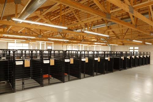 Gallery Image Dog_City_Interior.JPG