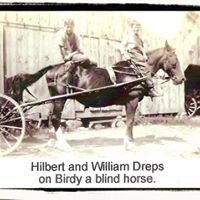 Gallery Image Birdy_the_Blind_Horse.jpg