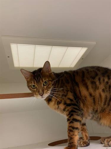 Cat hide and seek at Custer
