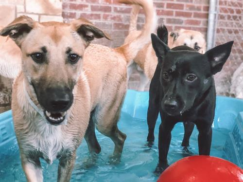 Dogs in portable pool at Premier