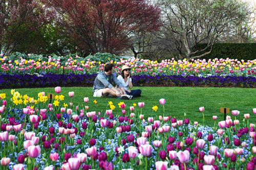 Dallas Blooms - Spring Festival with over 500,000 spring flowers