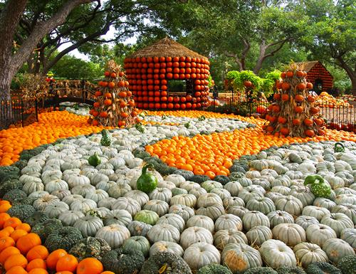 Autumn at the Arboretum Pumpkin Village- 90,000 pumpkins and gourds!