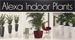 ALEXA INDOOR PLANTS, LLC