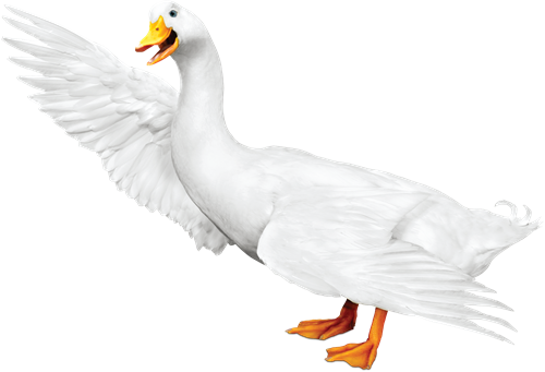 Gallery Image Aflac_Duck_2_png.png
