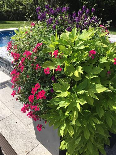 Get the lusciousness of this summer urn by having Bruss do it for you!