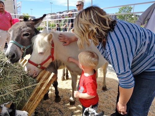 Petting Zoo at Free Community Carnival