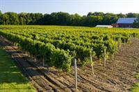 Lakeside Vineyards