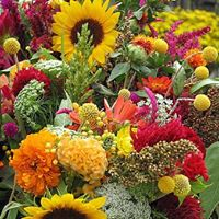 Gallery Image fall_flowers_2.jpg