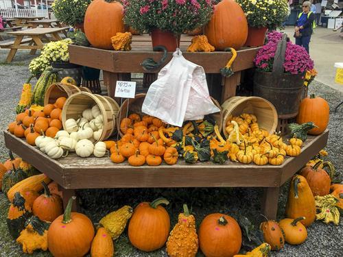 Gallery Image pumpkins_2019_1.JPG