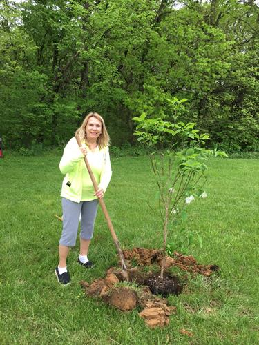 May Day planting of dogwood trees and pines on the lush grounds/landscape on one acre by owners