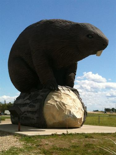 Giant beaver statue in Beaverlodge on Highway 43