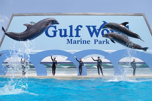 Dolphin Show at Gulf World Marin Park