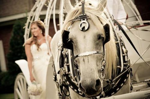 Horse drawn carriages provides 6 Passenger Vis-a-Vis Carriages driven by Coachman  dressed for your occasion to add elegance to your special day.  ***Please Call Now 850-269-1200 or | reserve for pricing and availability