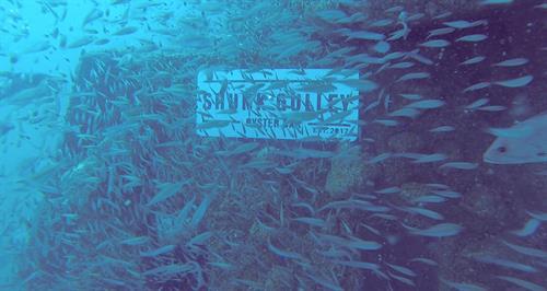 Gallery Image shunkgulley_reefsign11.jpg