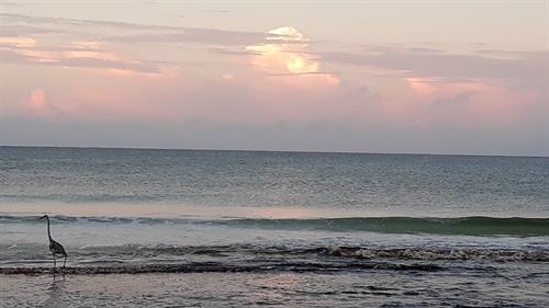 As South Walton Turtle Watch volunteer, always enjoy these early morning peace-filled walks on the Beach!
