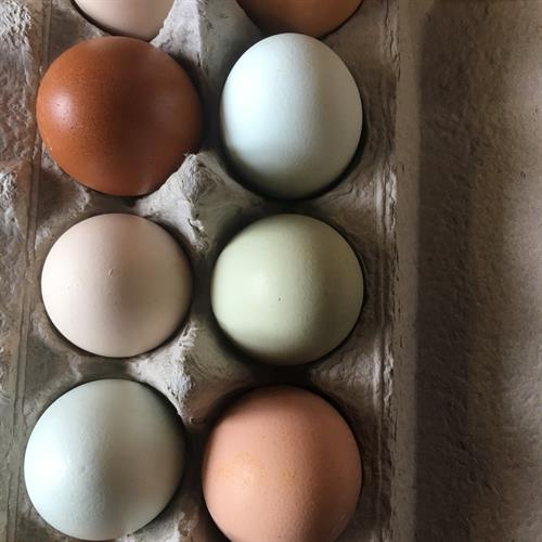 Farm fresh eggs for sale while supplies last!