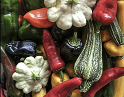 Gallery Image Squash_and_Peppers_NL.jpg