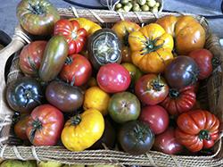 Gallery Image Tomatoes.jpg