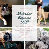 My Dog's Care Center - Saturday Dog Daycare