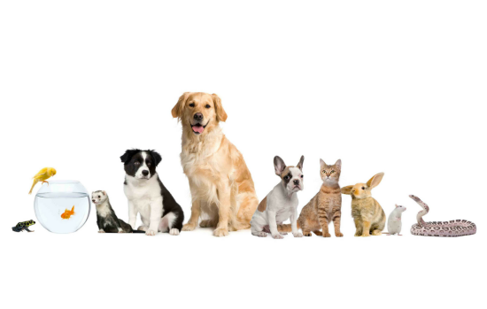 Pets & Veterinary Services