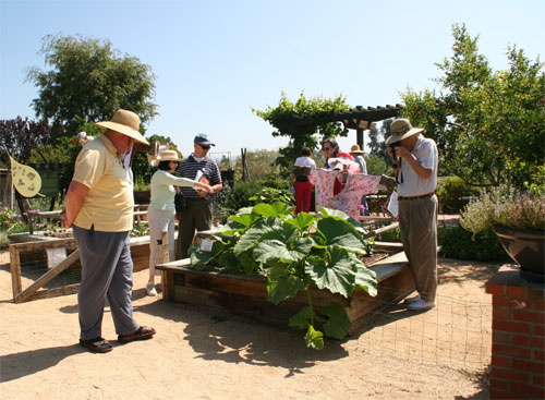 Learn a thing or two with our vegetable garden.