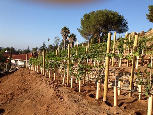 "Beautiful Mt Helix ""Casa Serena"" Vineyard Installation"