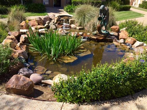 Front area Fish Pond