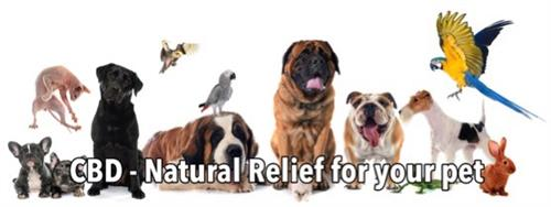 Hempworx CBD oil for pets and dog treats