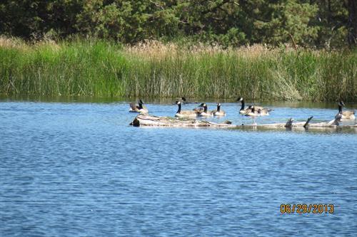 West fly fishing lake