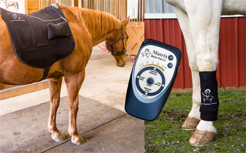 Microcurrent Therapy for Horses- Best Vet III, Silver Knit Back Pad & Leg Wraps