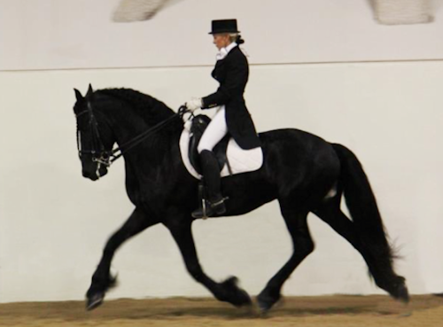 World Dressage winner,