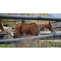 New Charges Filed against Creswell Woman Accused on Animal Neglect
