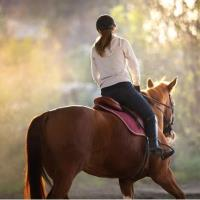 Survey Results Evaluate the Effect of COVID-19 Pandemic on Equine Management in the US & Canada